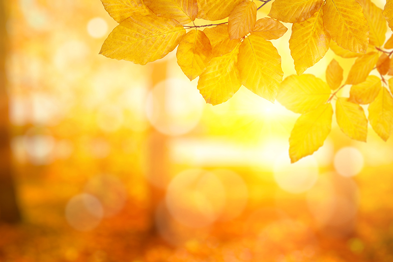 photo of warm low sunlight through fall leaves